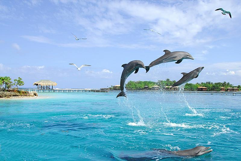 Картинки море дельфины чайки